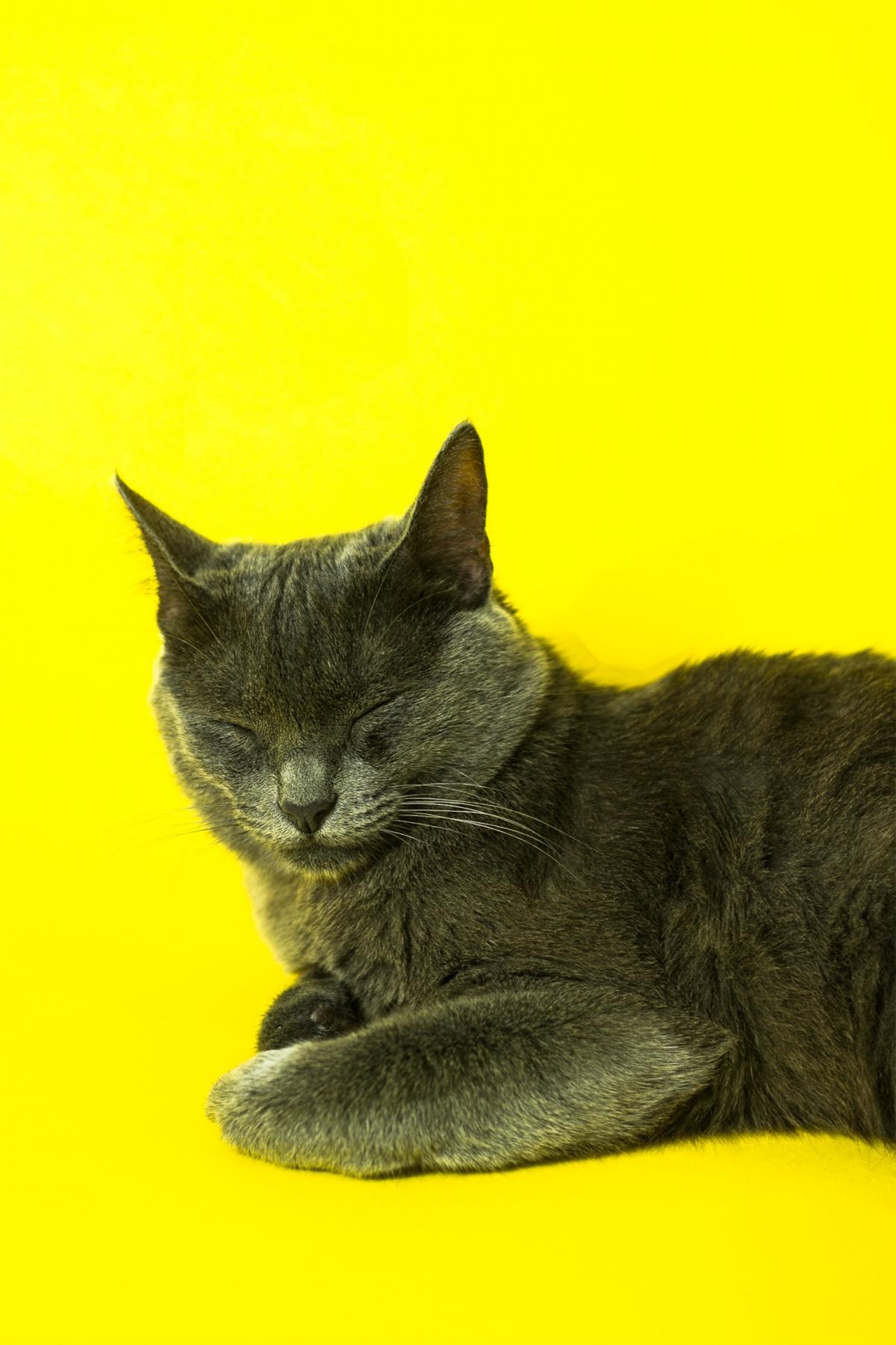 Kitty Domestic cat Cat #424921