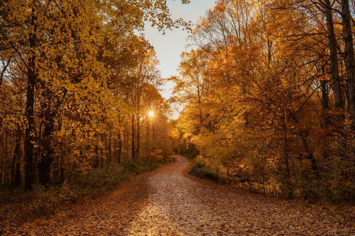 Tree Autumn Forest