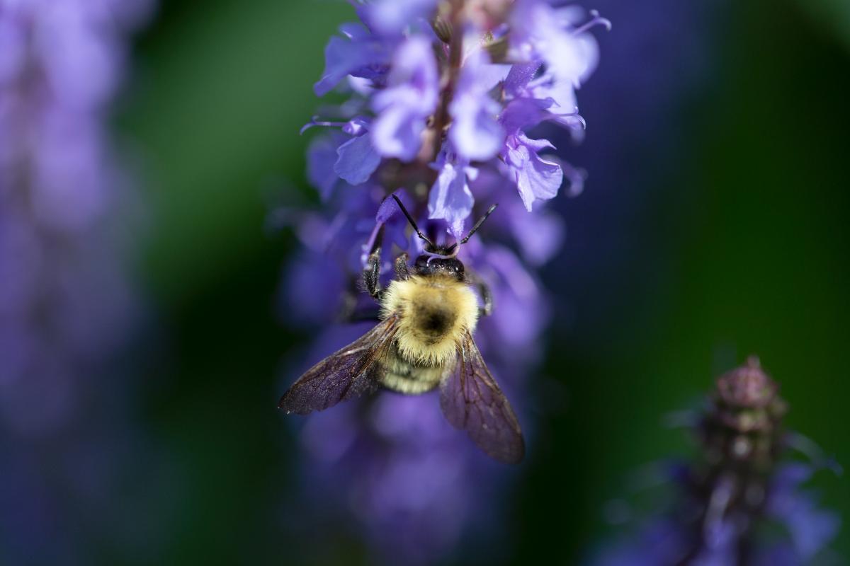 Bee Flower Macro Free Photo #425244