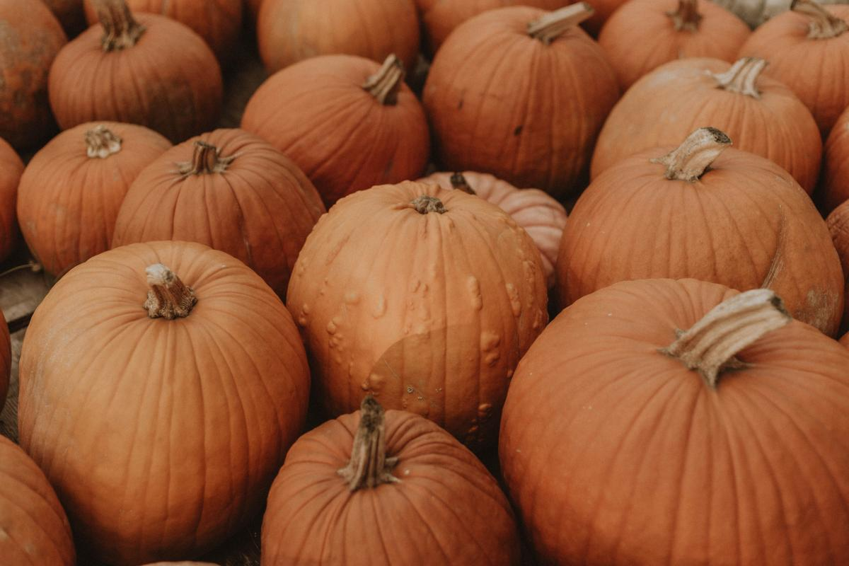 Pumpkin Squash Vegetable #425363