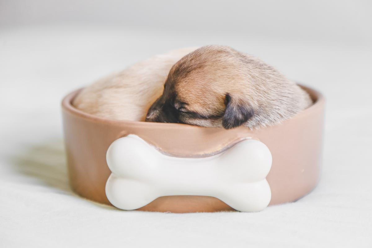 Dog Cute Canine #425385