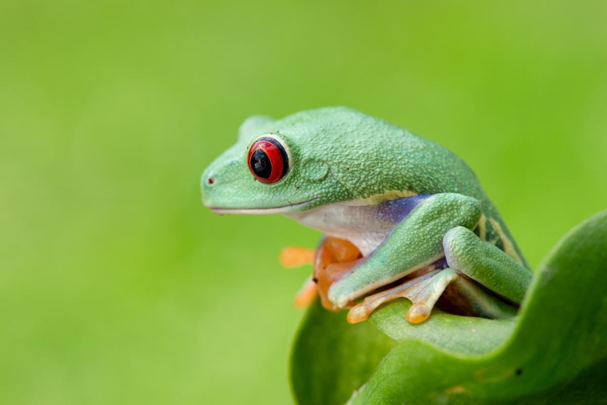 Tree frog Frog Amphibian #425392