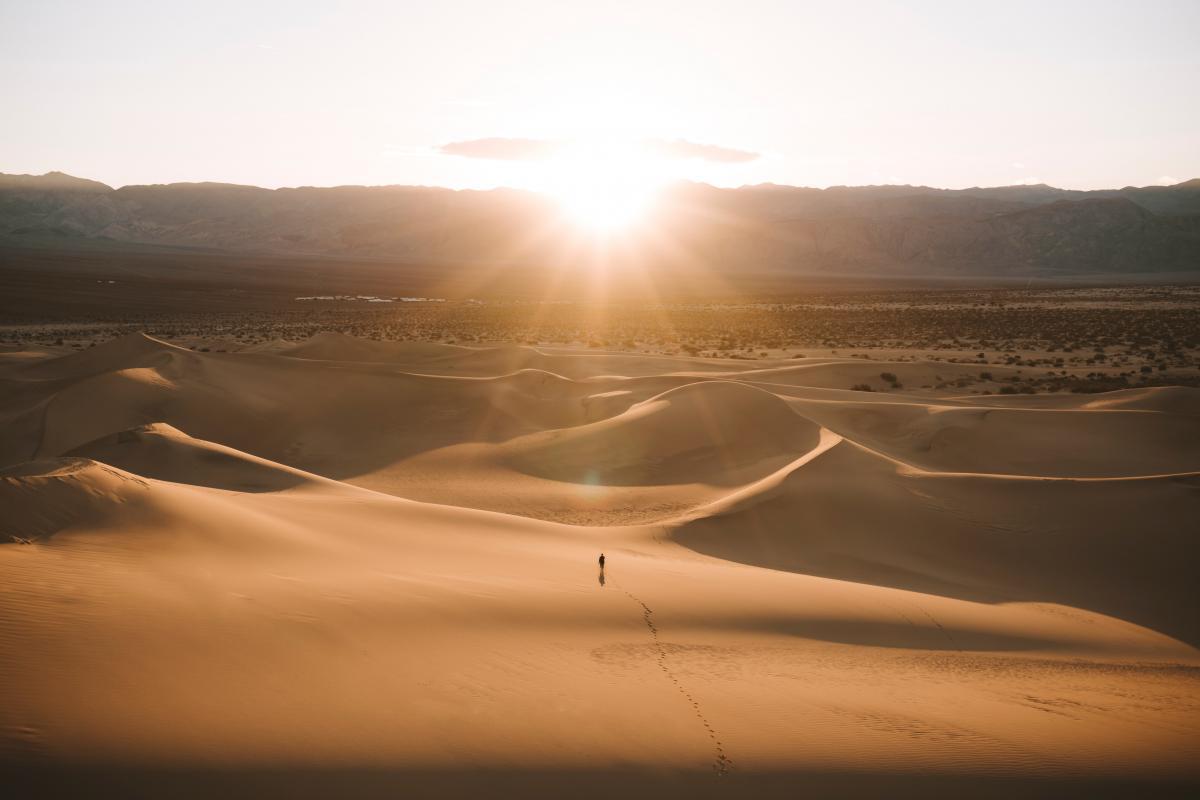 Sand Dune Soil
