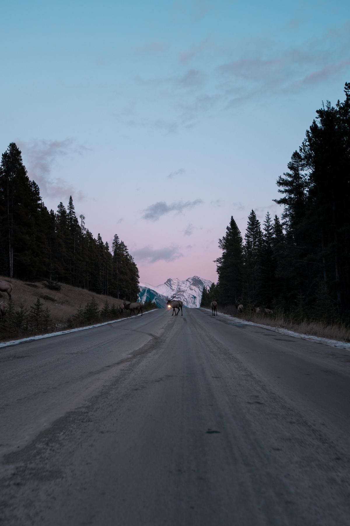 Expressway Road Highway #425549