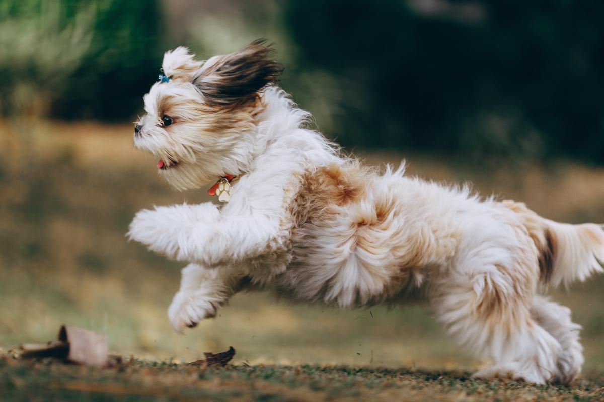 Terrier Dog Hunting dog #425686