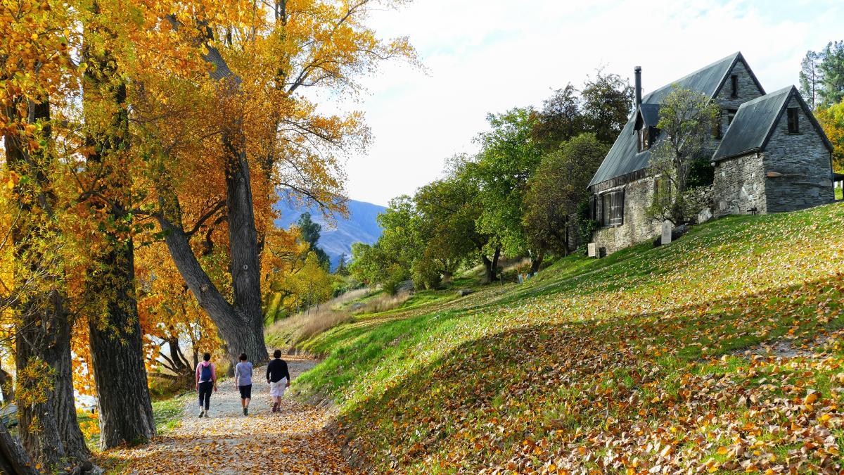 Autumn Tree Landscape Free Photo #425709