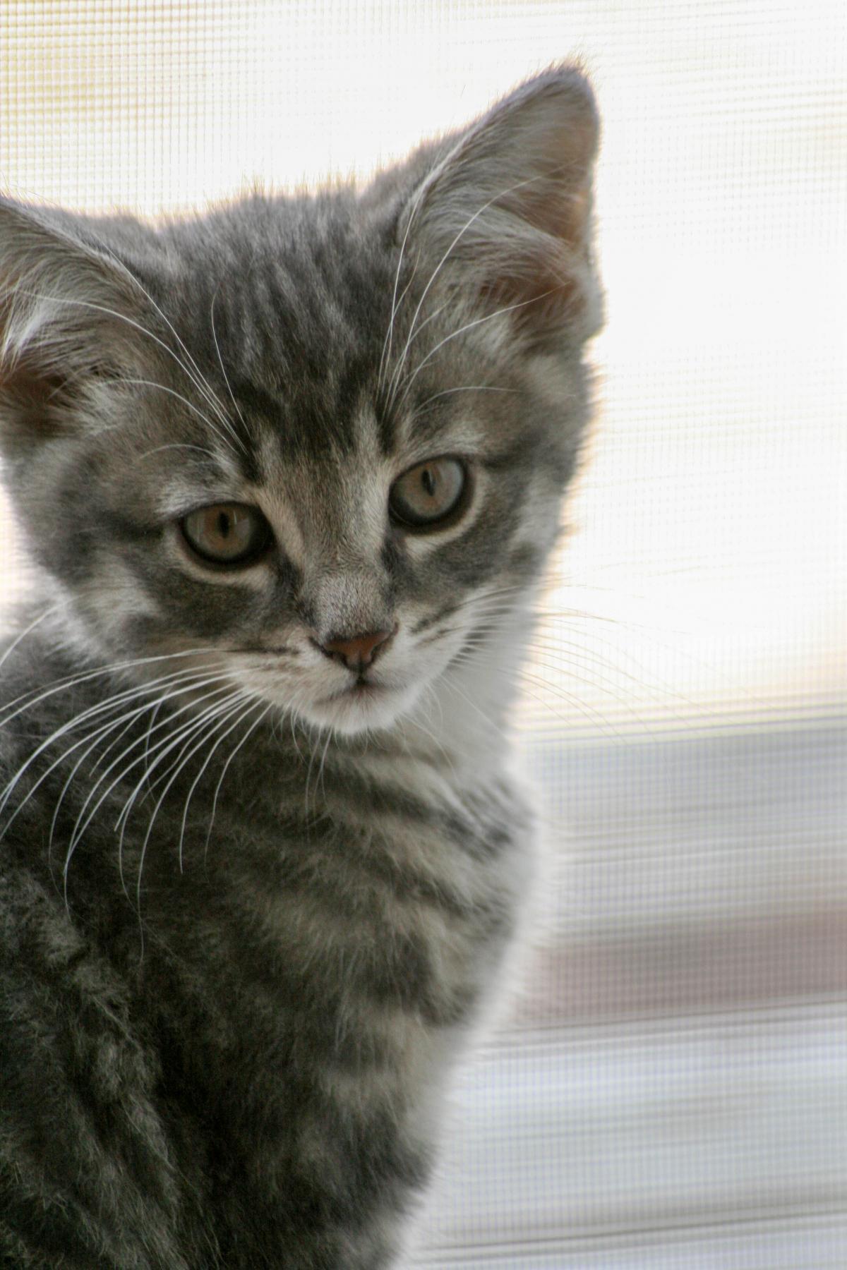 Kitten Cat Feline #425716