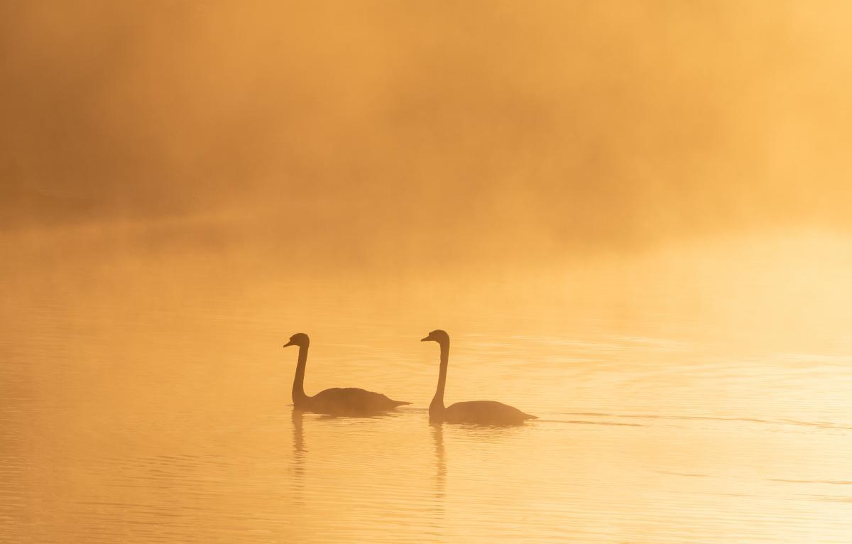 Pelican Bird Aquatic bird #425724