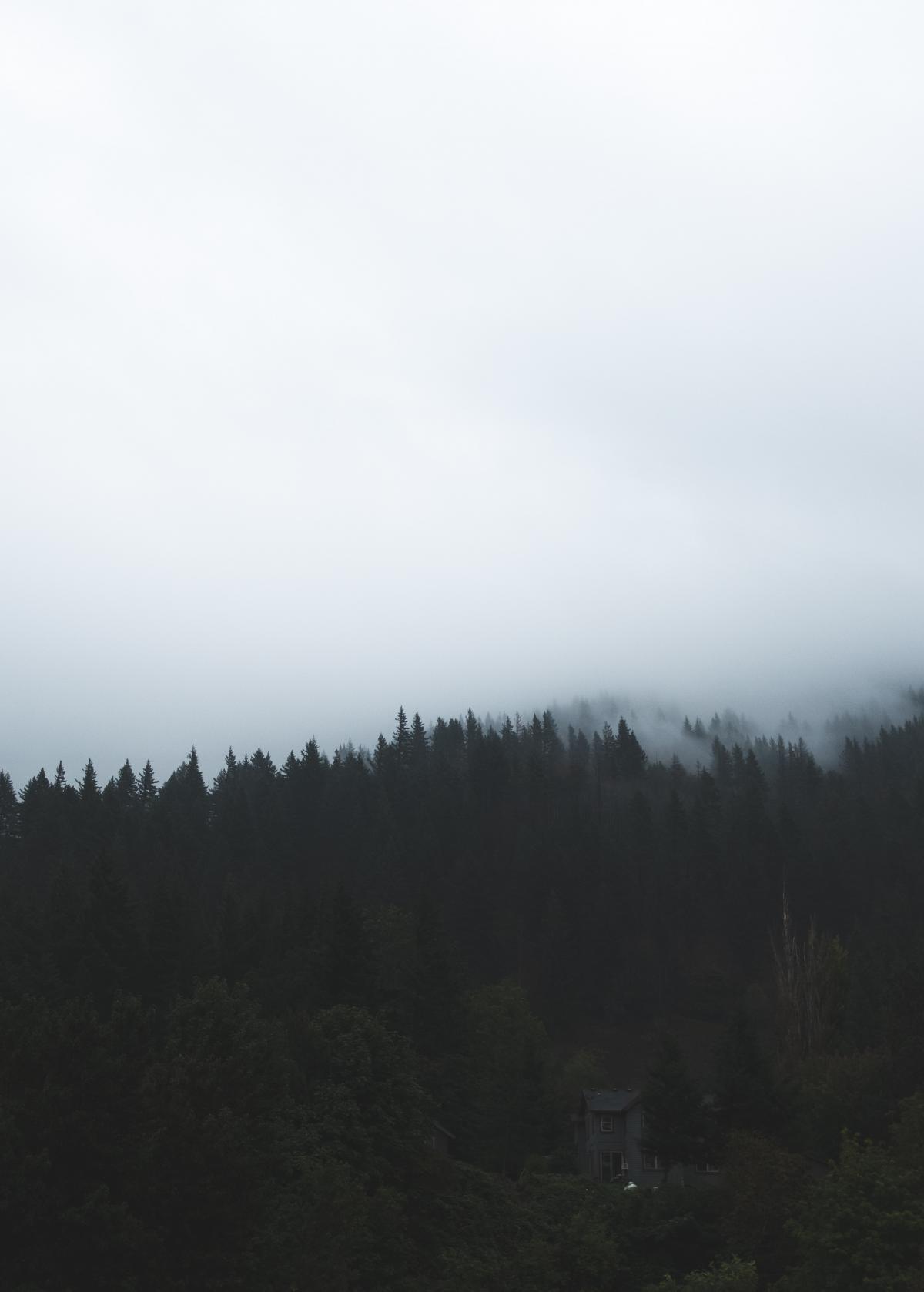 Fir Forest Landscape #425782