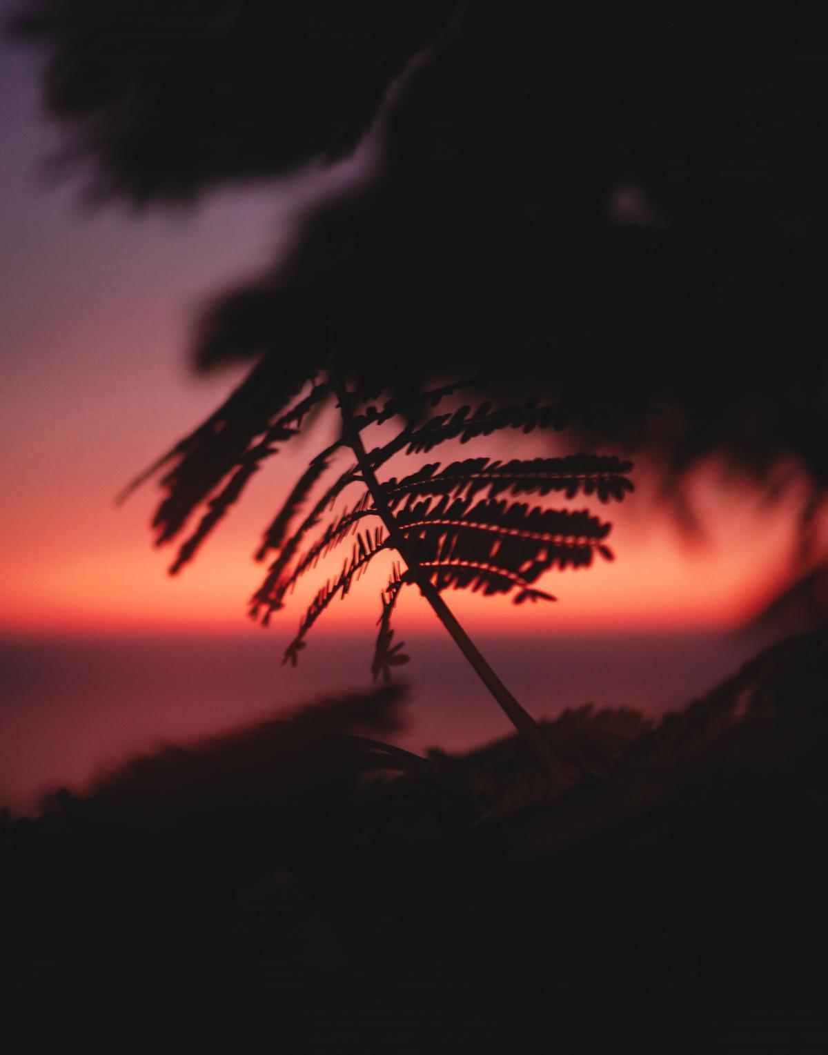 Sun Star Sunset