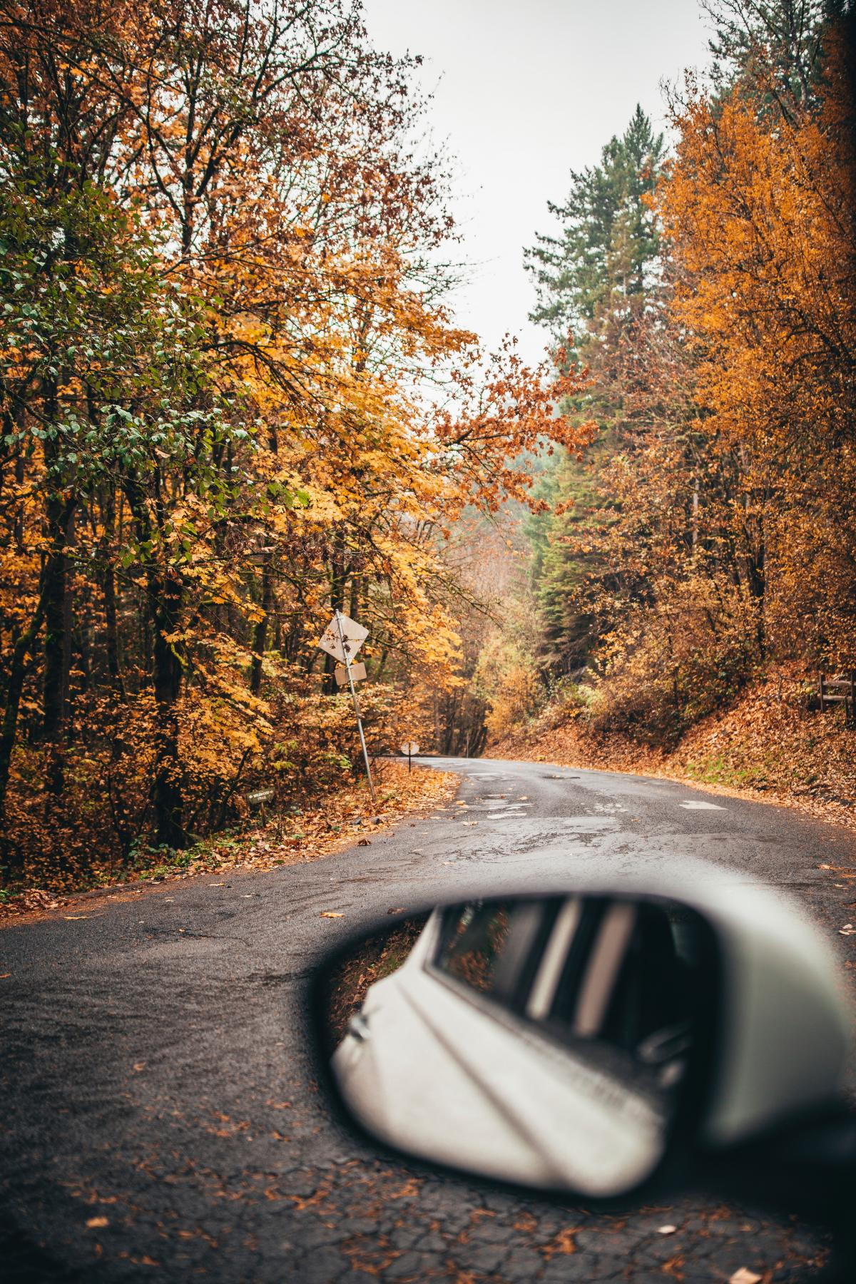 Autumn Tree Fall #425821