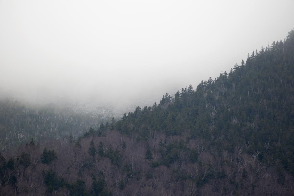 Fog Mountain Trees Free Photo #425844