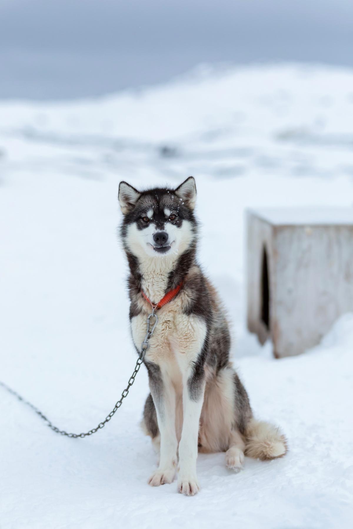 Dog Canine Domestic animal #425982