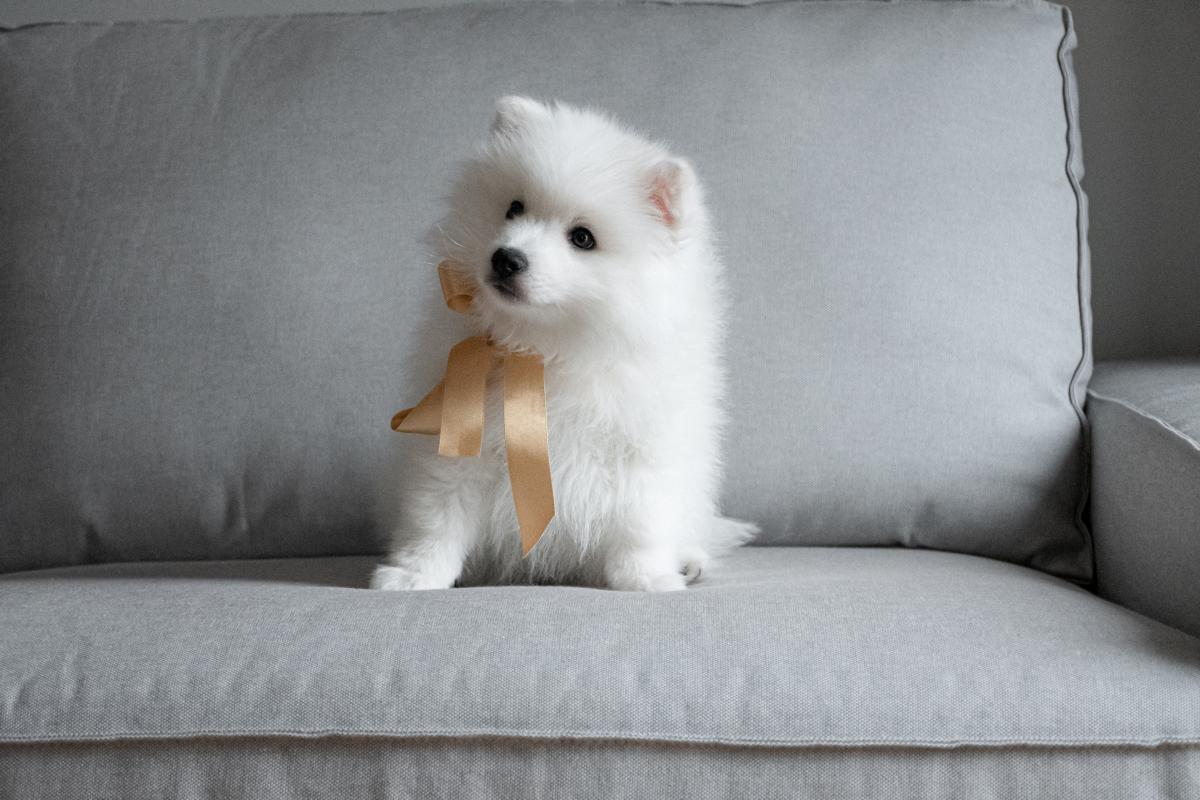 Dog Canine Domestic animal #426239