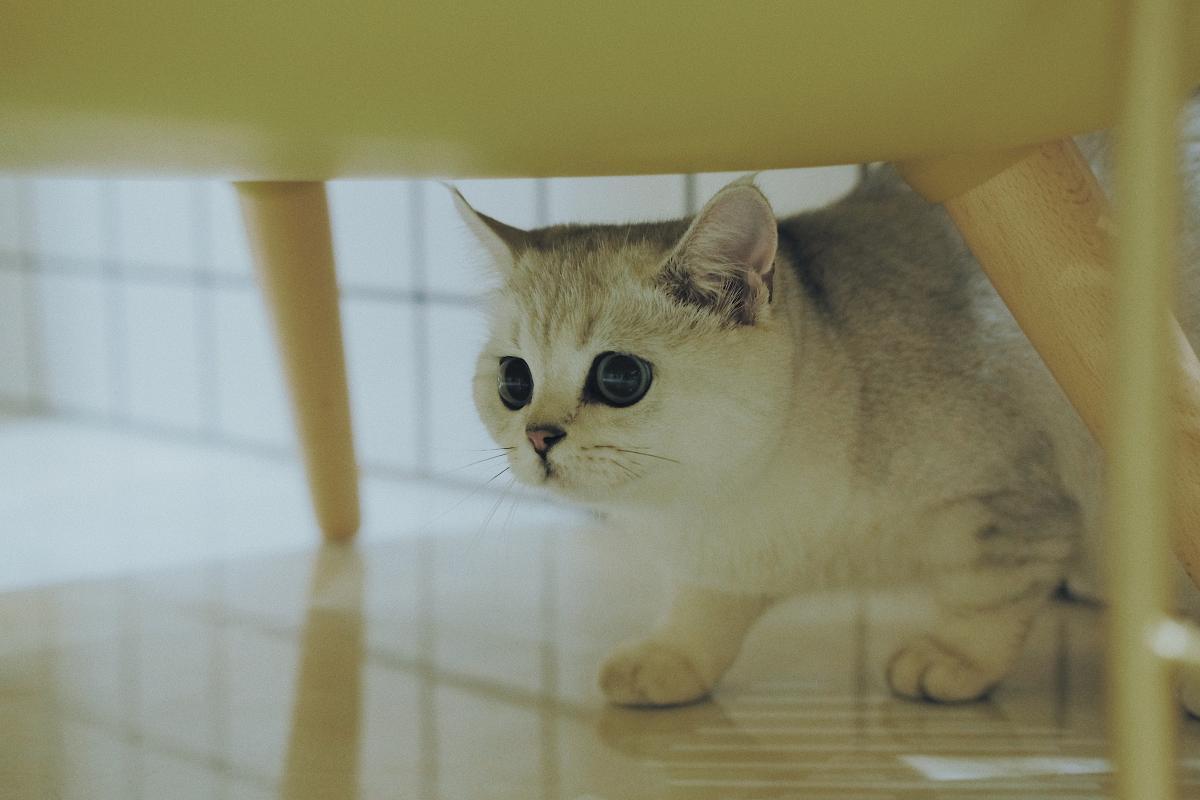 Kitty Cat Feline #426446