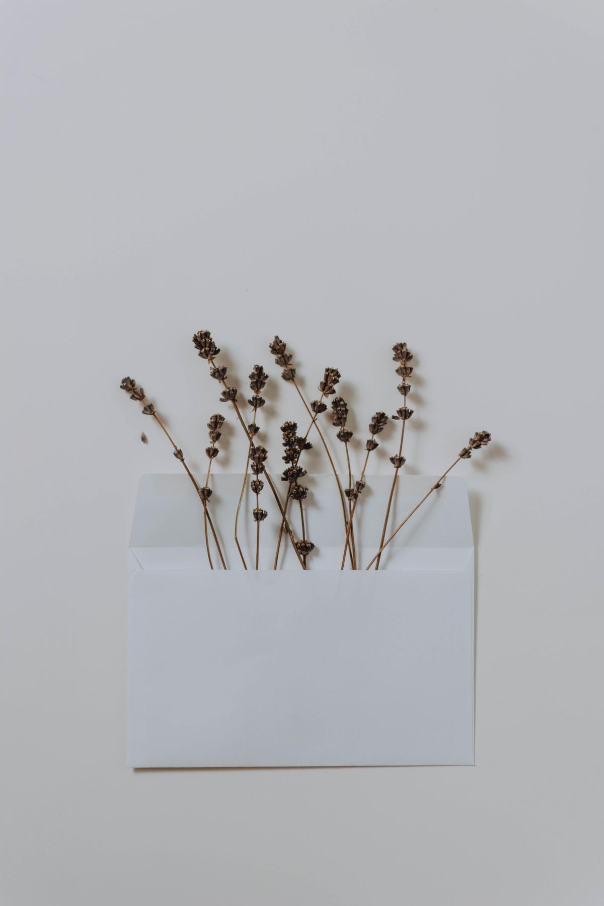 Plant Herb Flower #426531