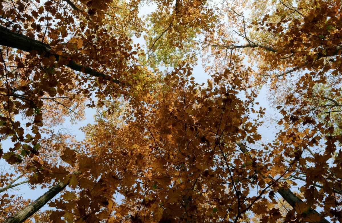 Low Angle Photo of Brown Leafed Trees #426563
