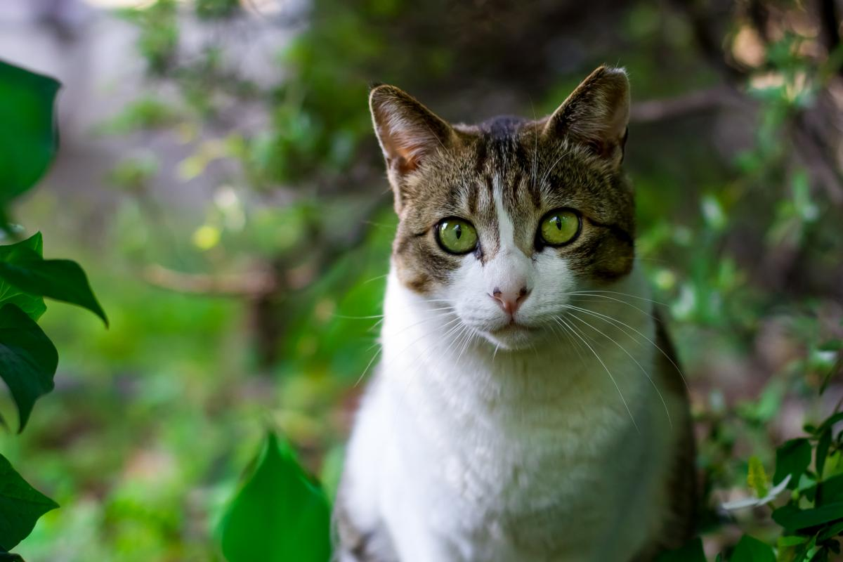 Free Animal Cat Asia Symbol 42979 Stock Photo Avopix