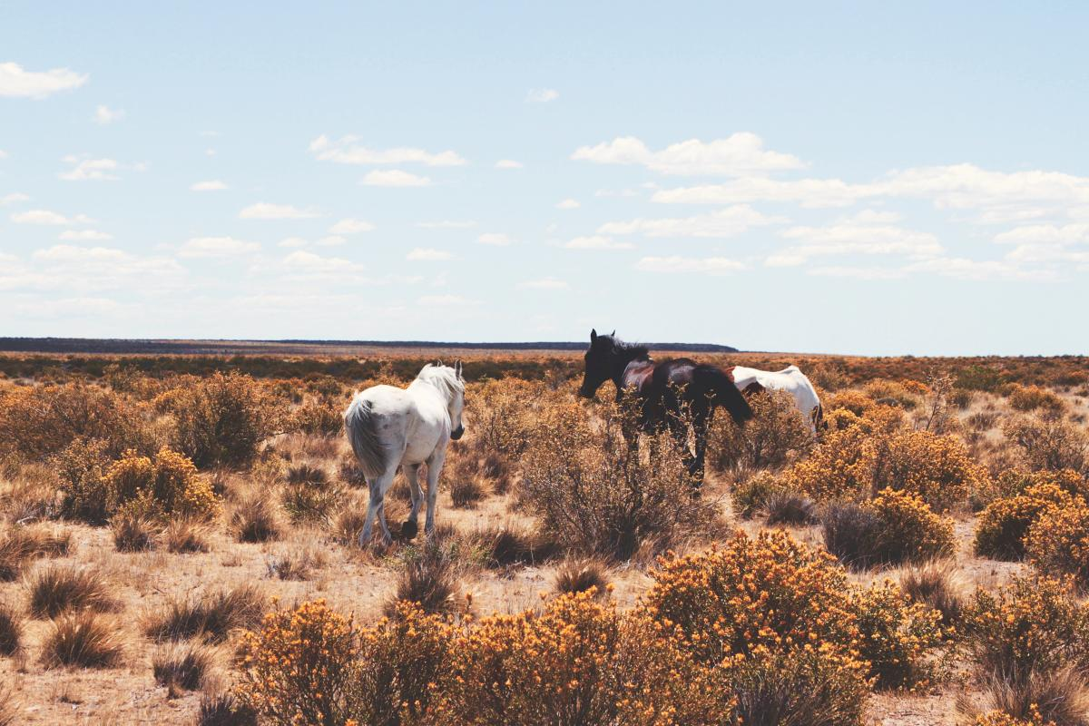 Three Horse Photography