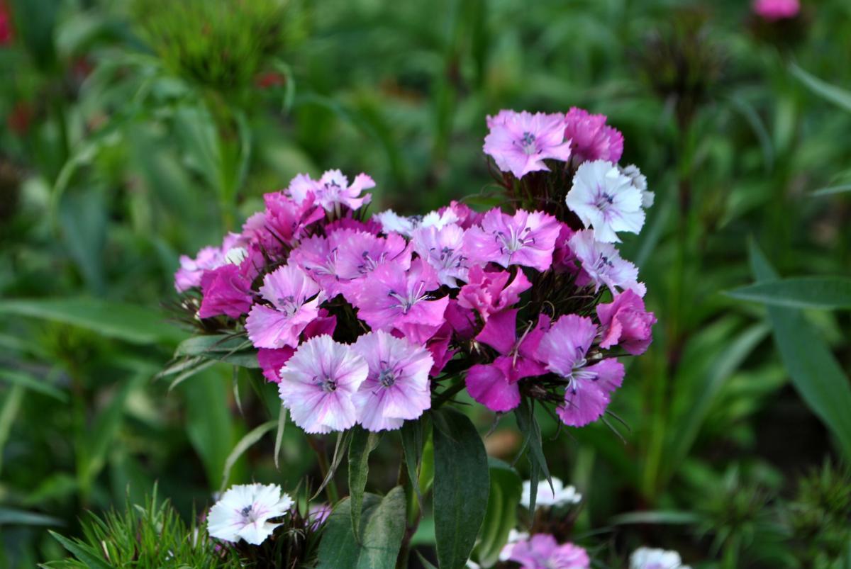 Flowers #47861