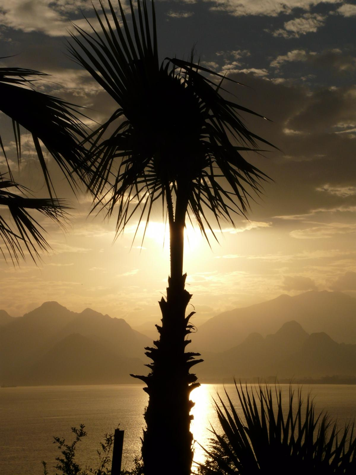 Silhouette Photo of Coconut Tree Beside the Body of Water #49224