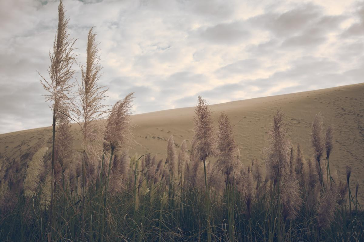 Field of Wheat Under a Cloudy Sky #49443