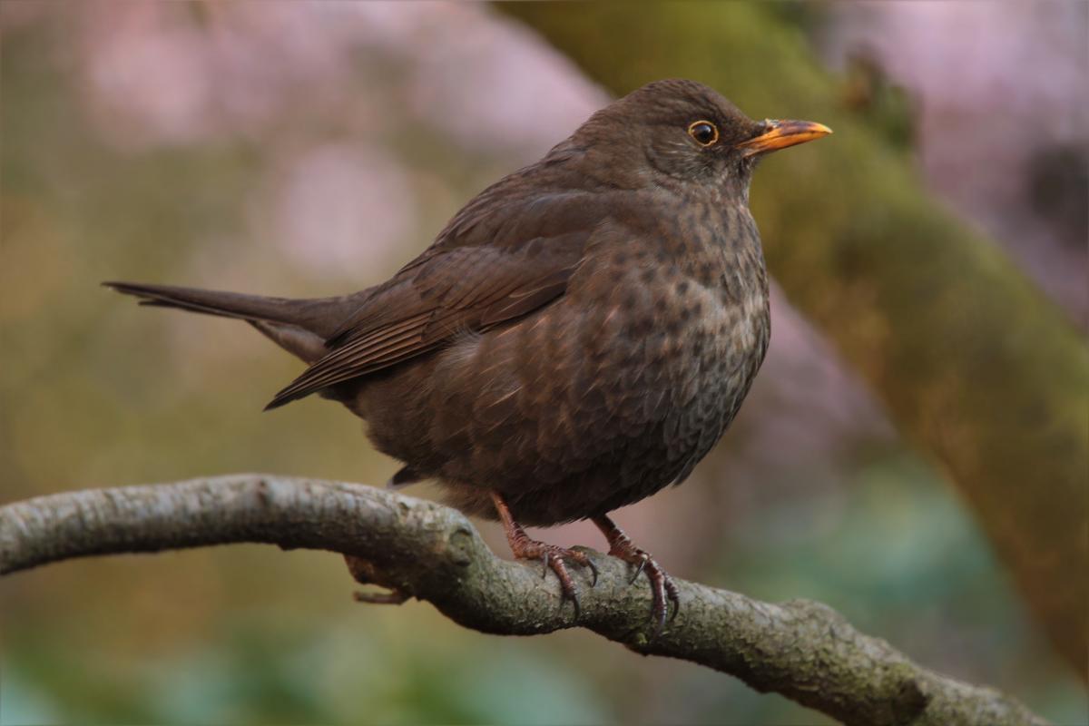 Bird garden spring close