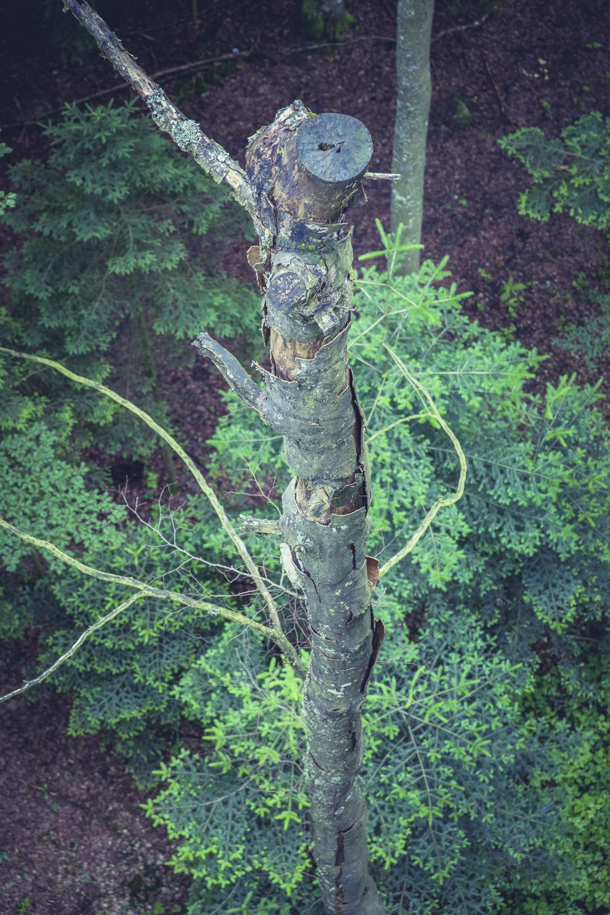 High Angle Photo of Brown Wood Trunk