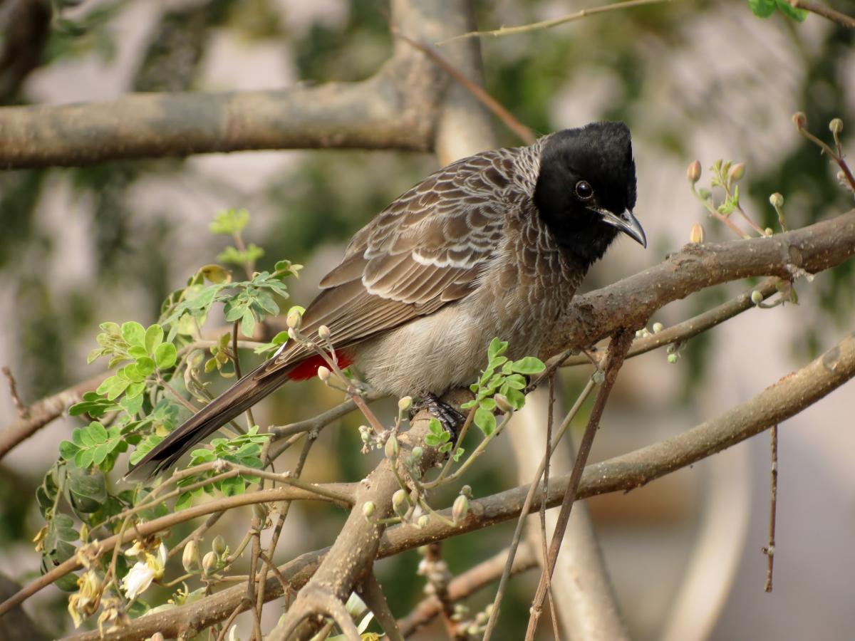 Brown Black Small Beak Bird on Brown Tree Branch during Daytime