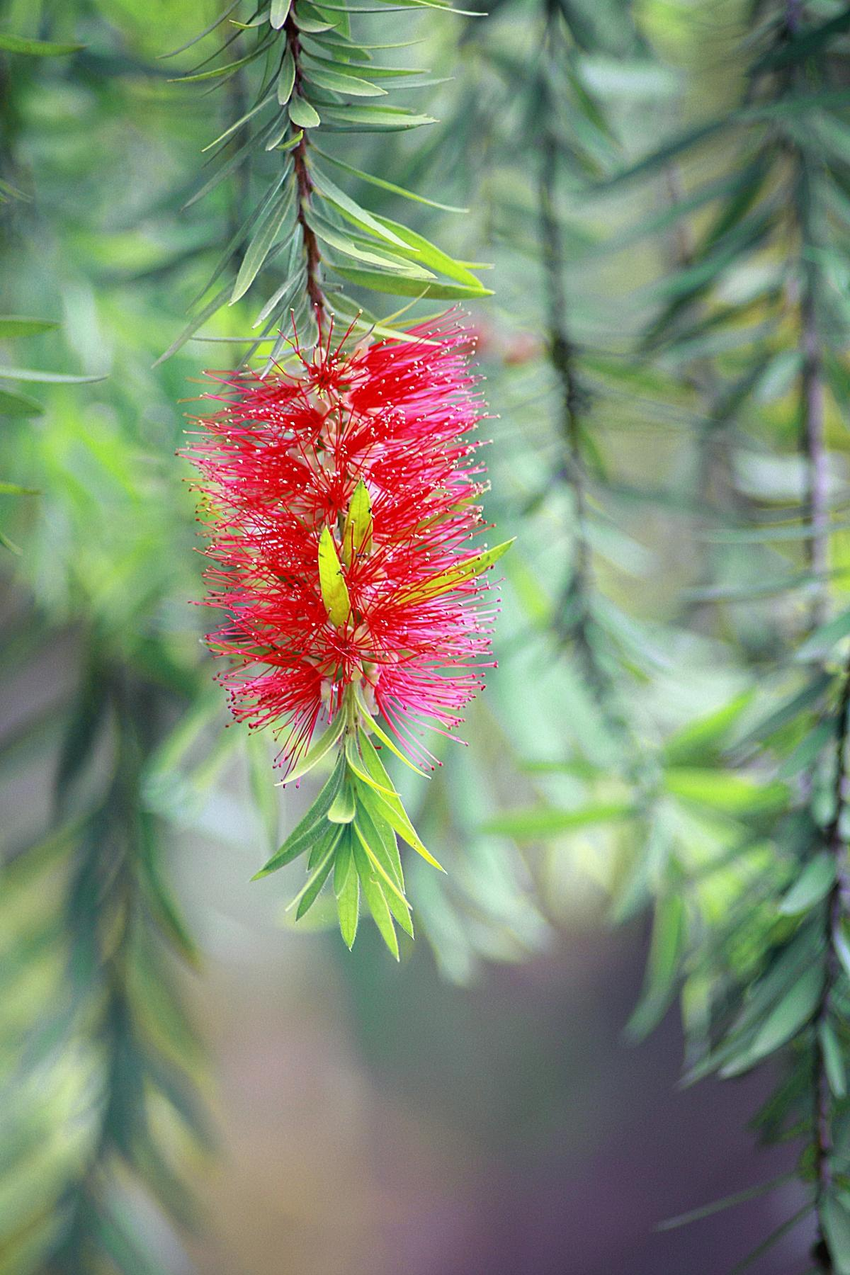 Adult aromatherapy arrangement bloom #53407