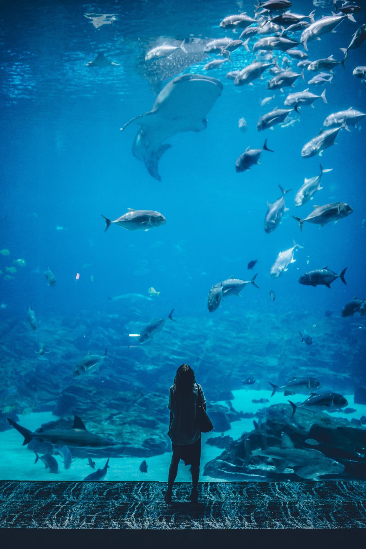 Shark Hammerhead Reef #56351