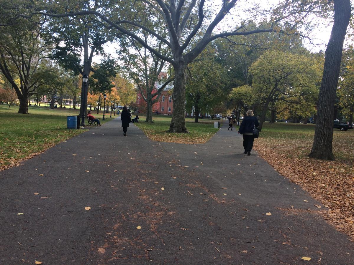 Fall fall foliage two paths #57149