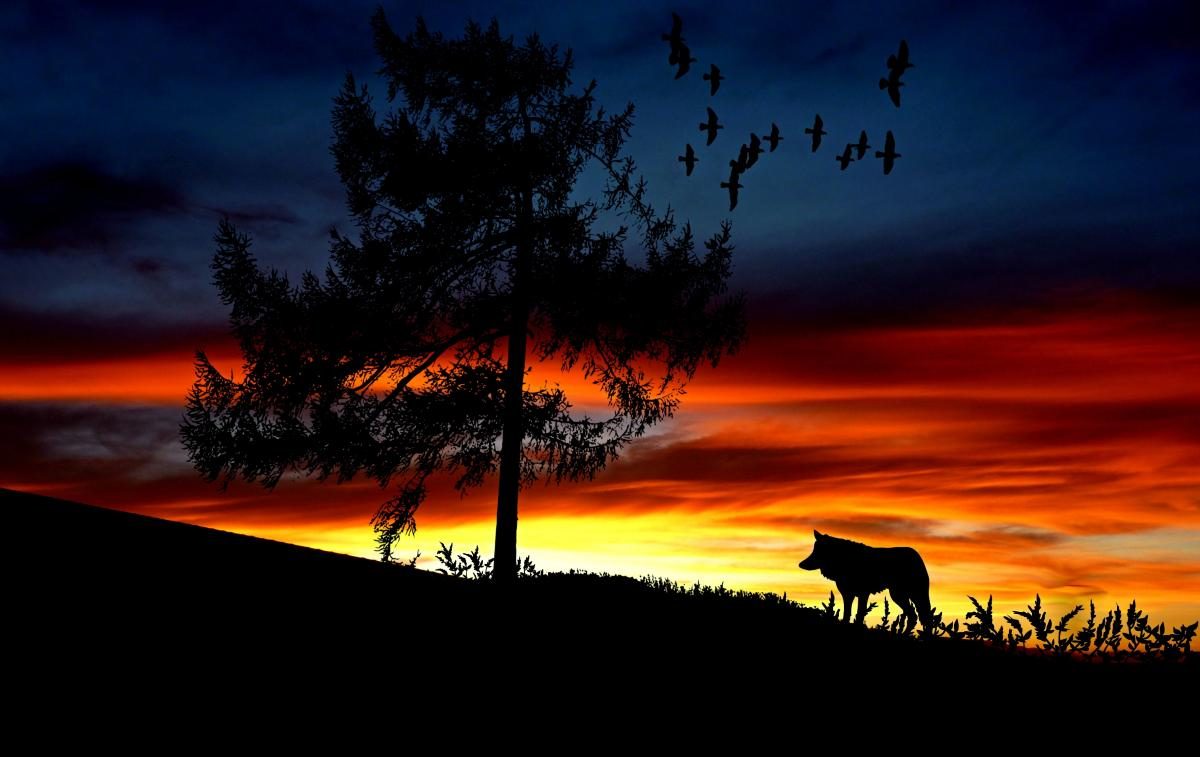 Silhouette Dog on Landscape Against Romantic Sky at Sunset #60077
