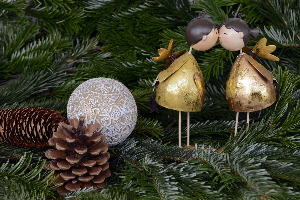 Close-up of Mushrooms Growing on Tree #60460