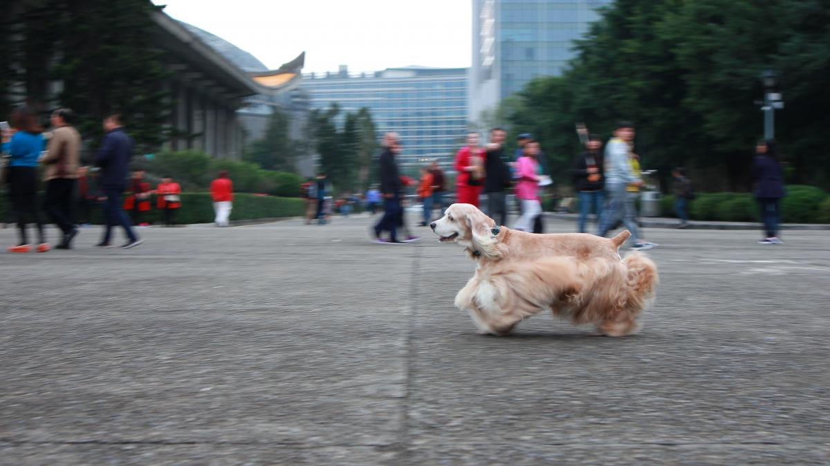 Dog in city #61863