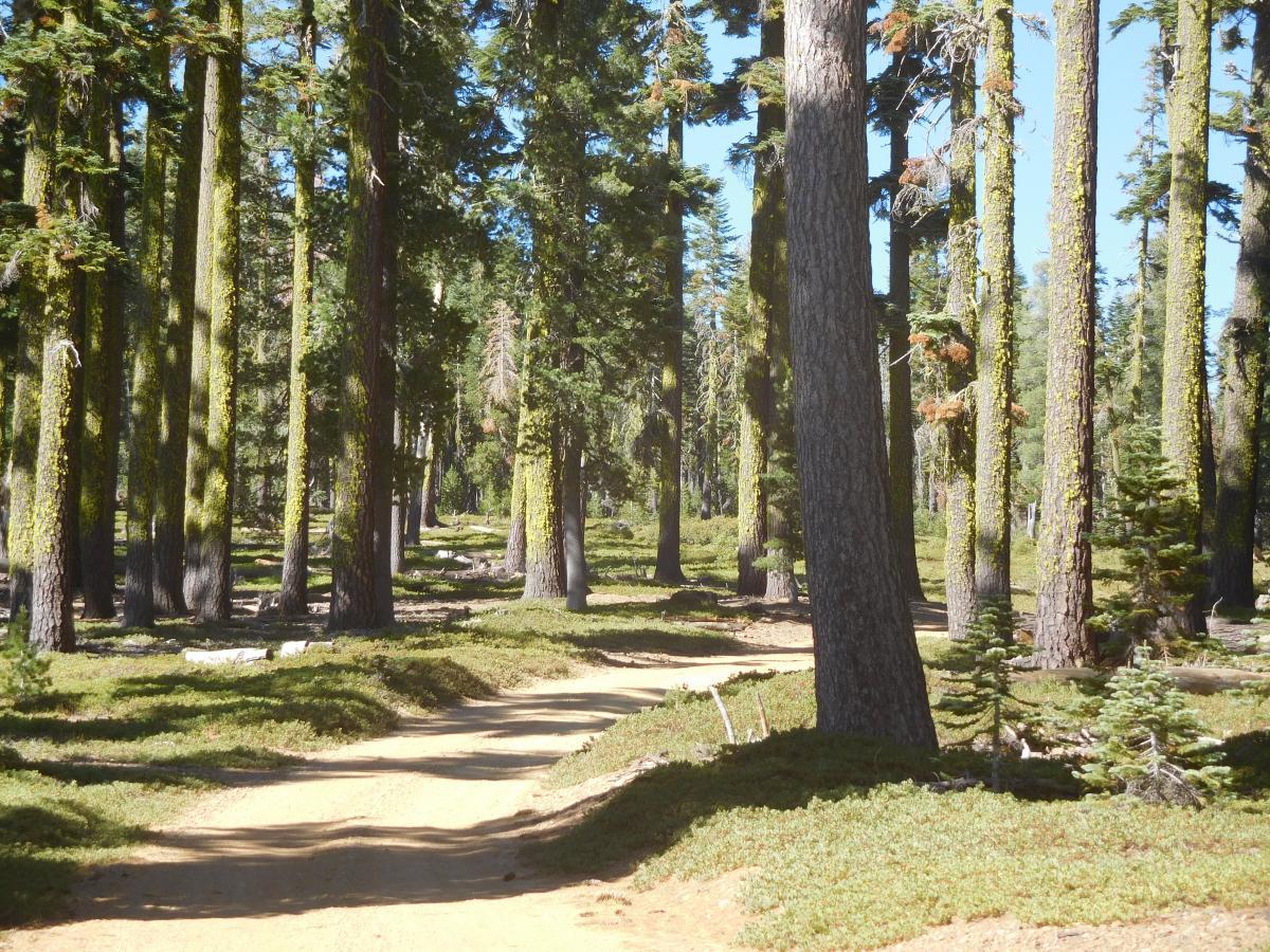Árboles en Bosque #62196