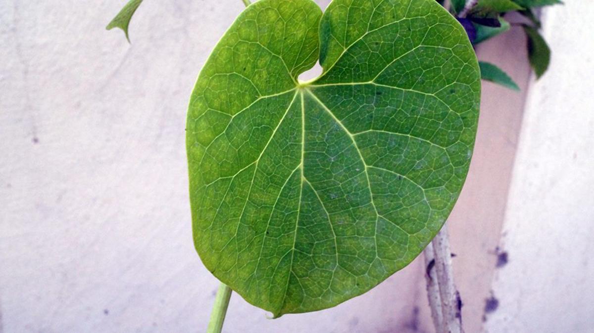 Cierre de planta verde fresca #63410