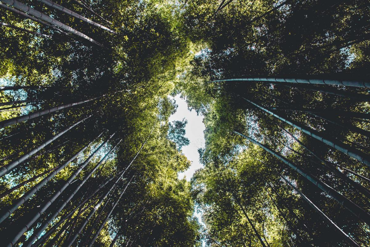 Vue d'angle bas des bambous dans la forêt #63874