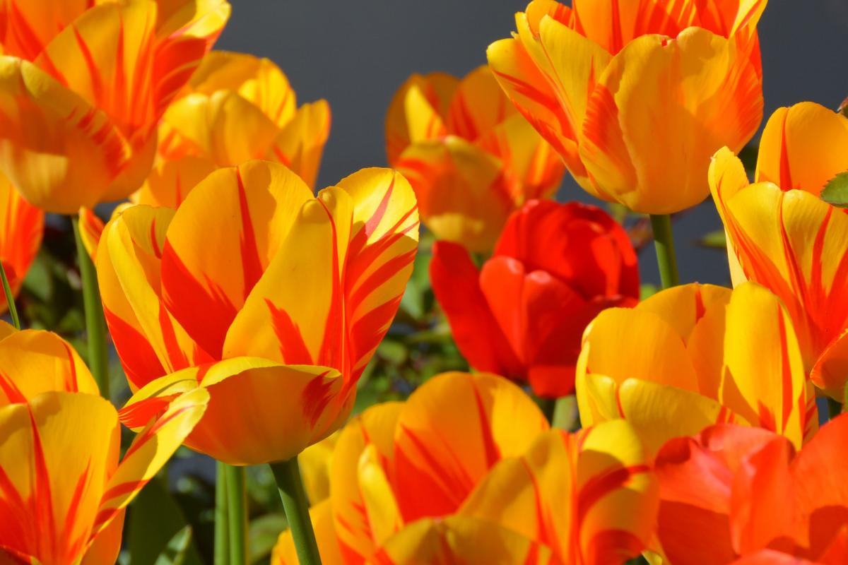 Free Close-up of Multi Colored Flowers #64258 Stock Photo | Avopix.com