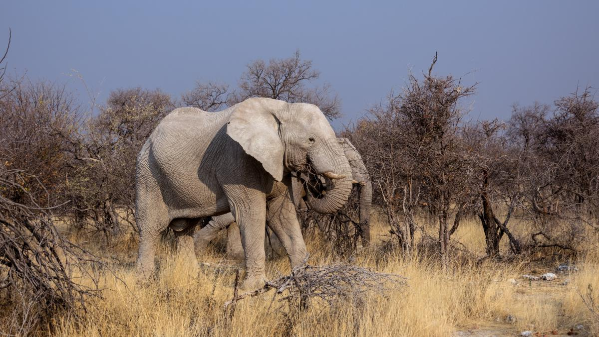Africa animals botswana drought