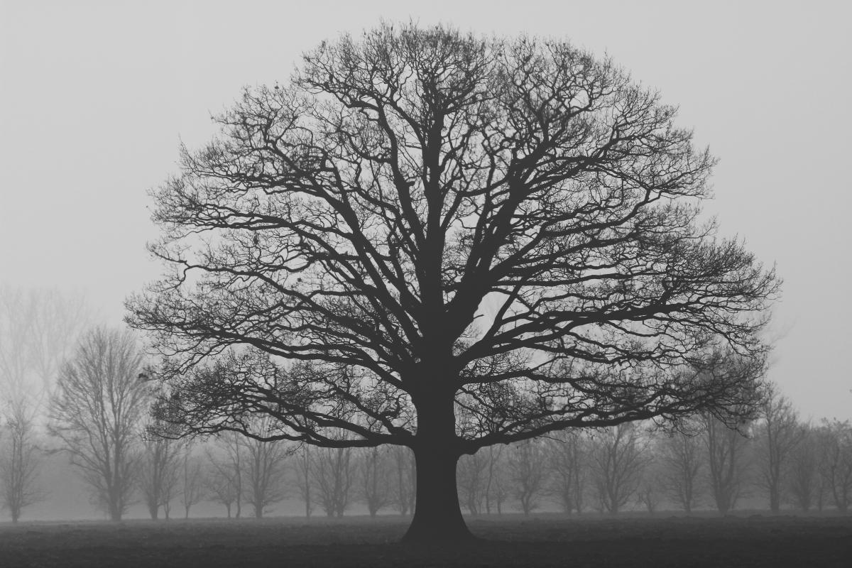 Alone autumn branch cold #67920