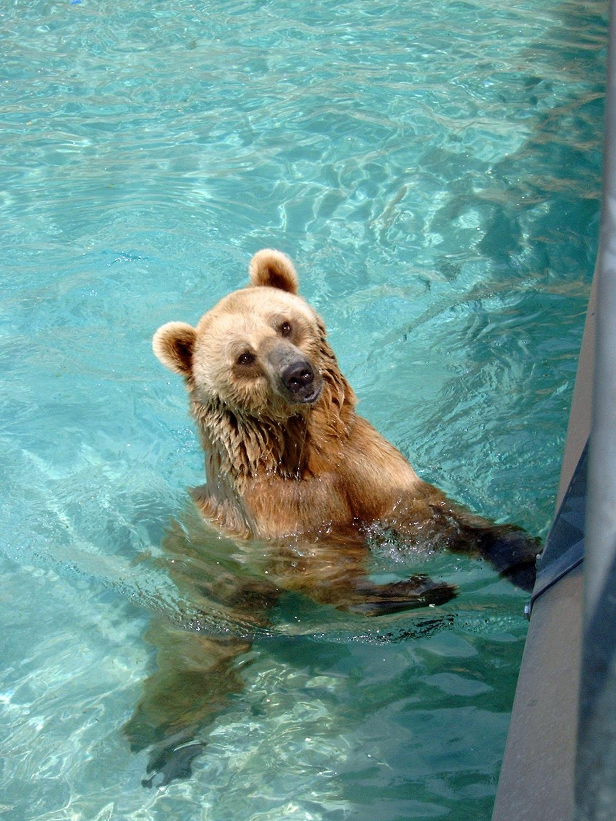 Animals bear brown fur #69424