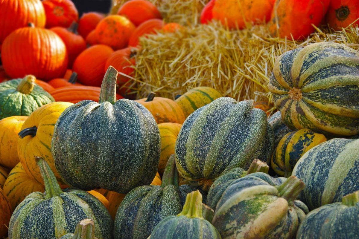 Autumn farm giant pumpkin gourd #73228