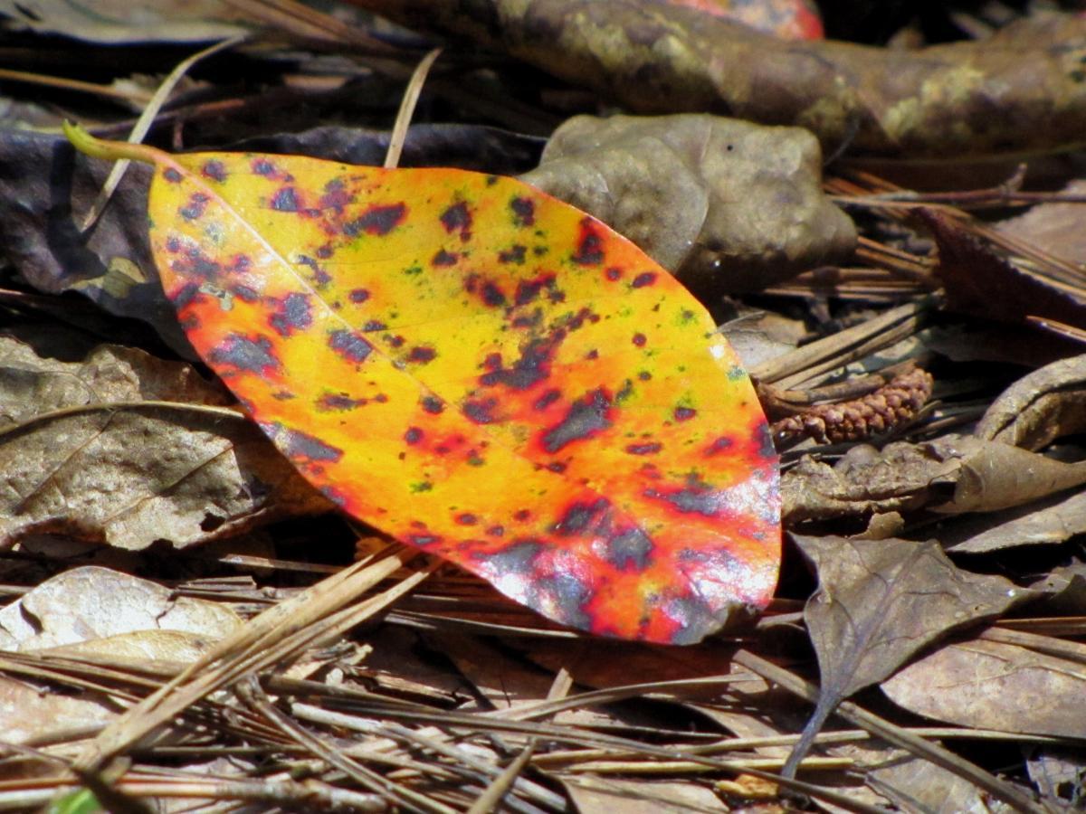 Autumn botany brown ecology