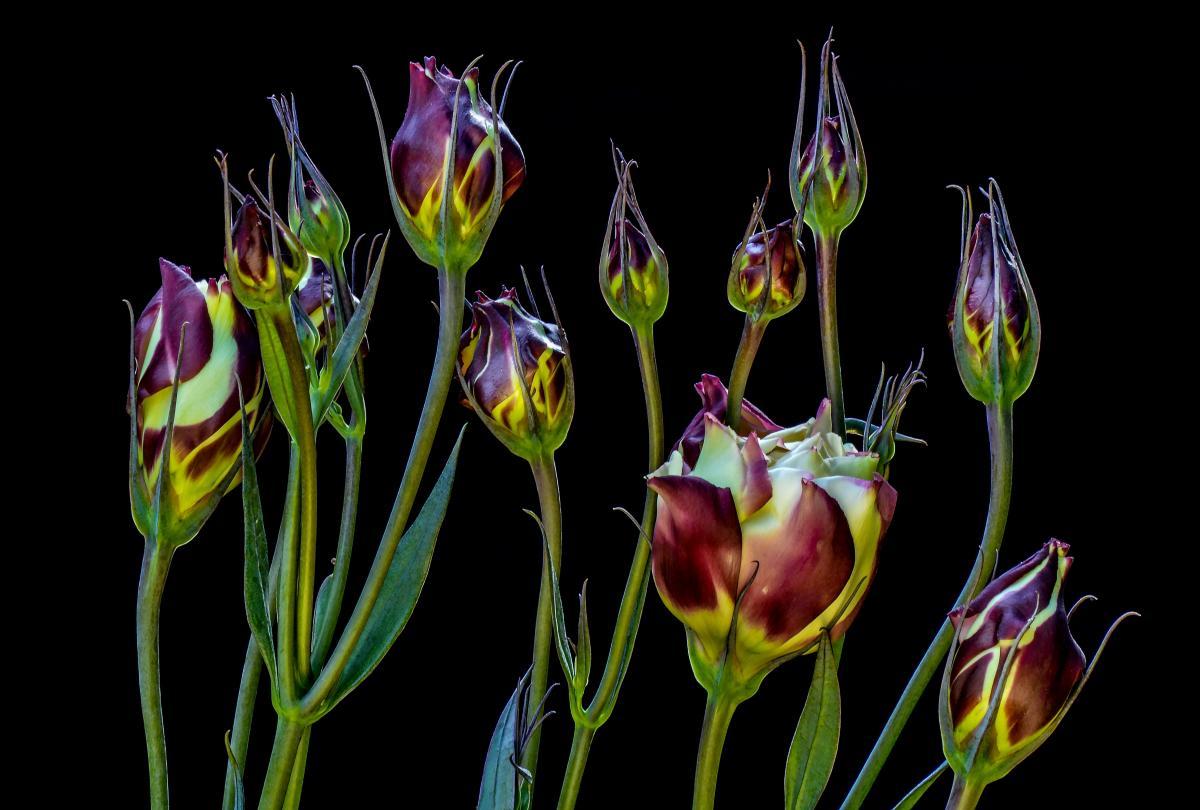 Beauty bloom blooming closeup #76331