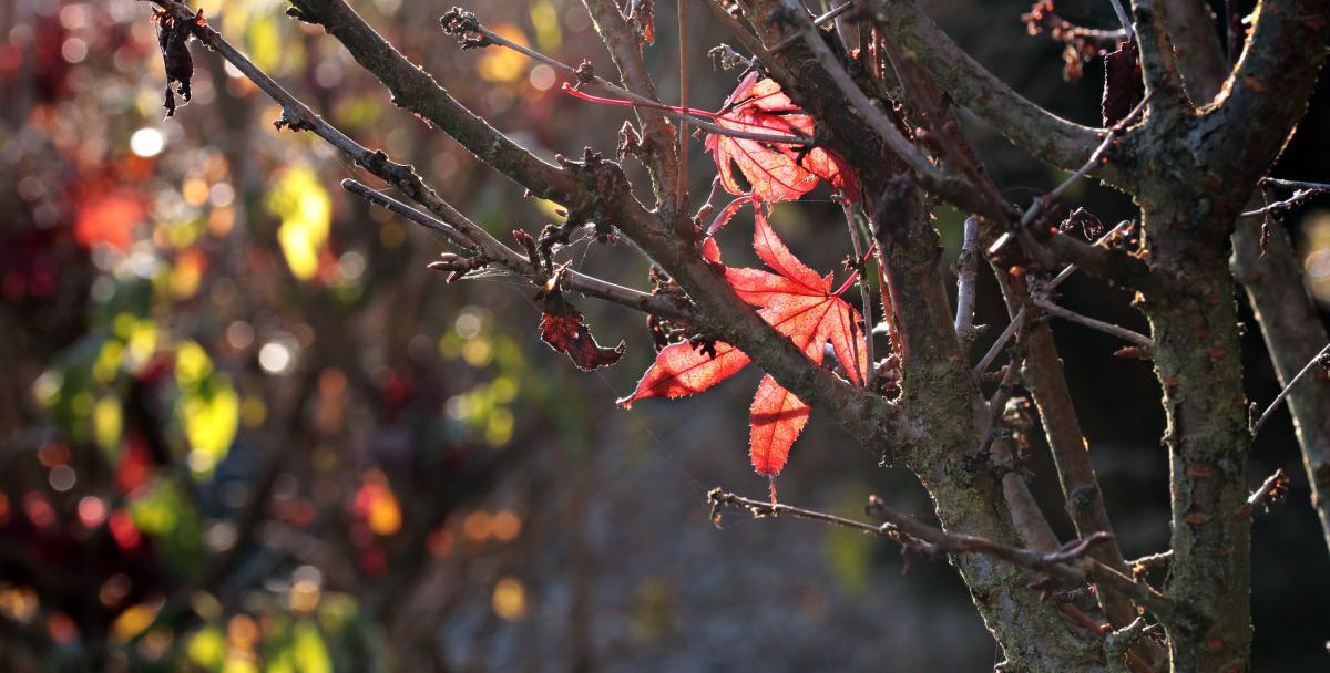 Autumn backlit shot colorful falling leaves #76449