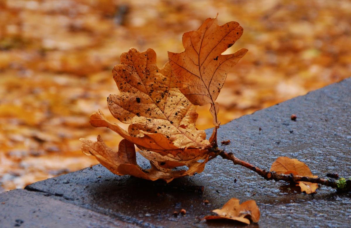 Autumn autumn colours autumn leaf close #76456