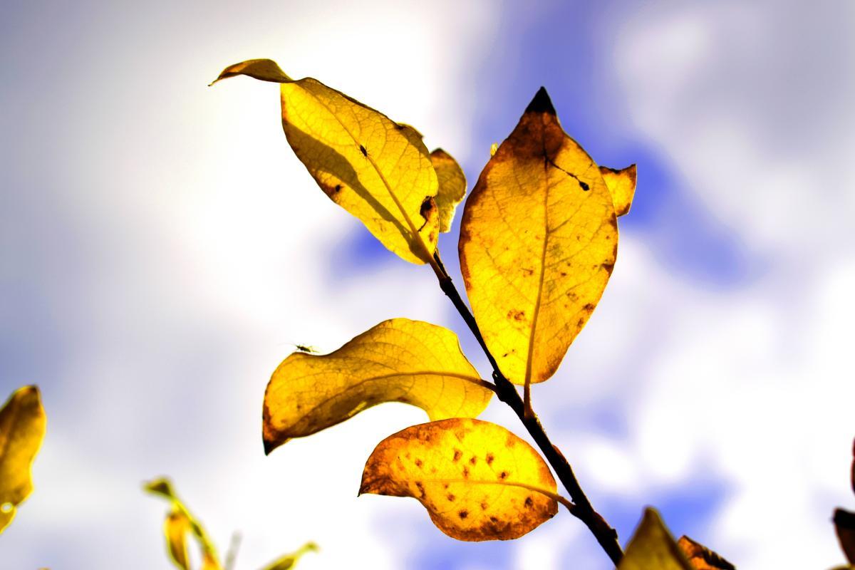Autumn autumn leaf autumn nature nature #76458
