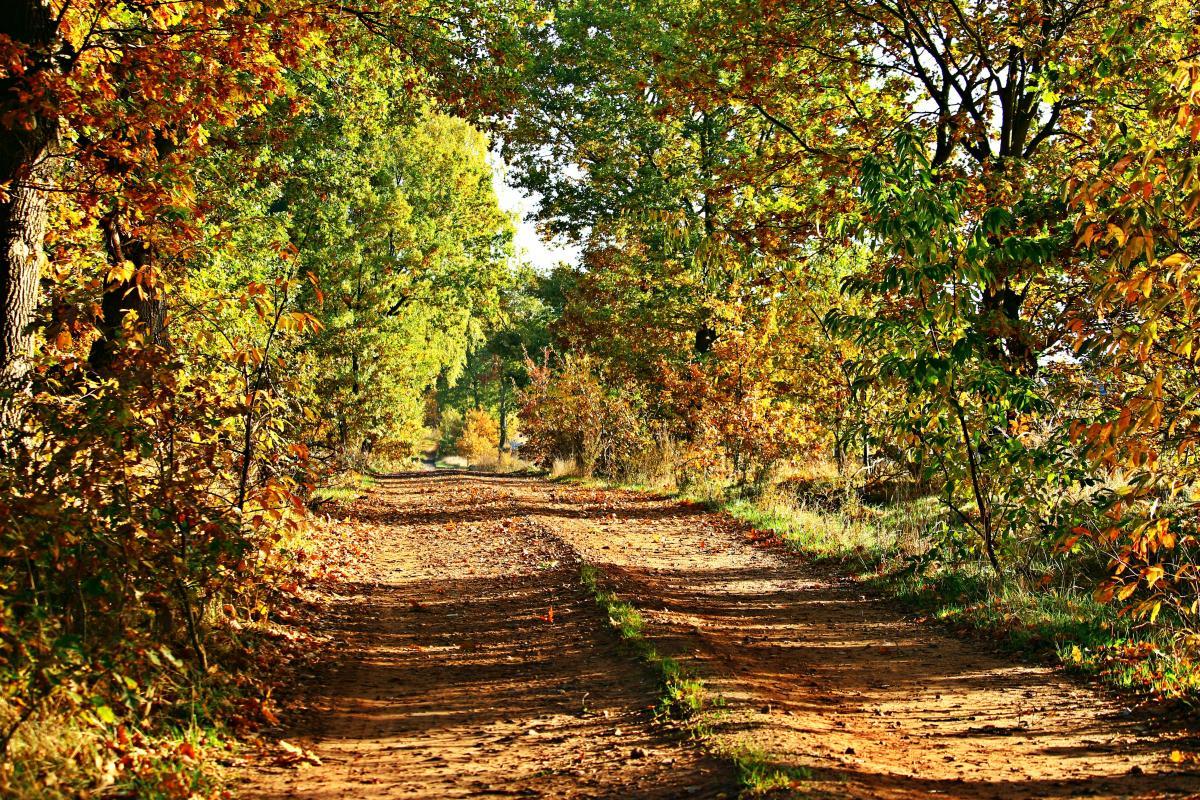 Autumn autumn day autumn forest autumn landscape #76463
