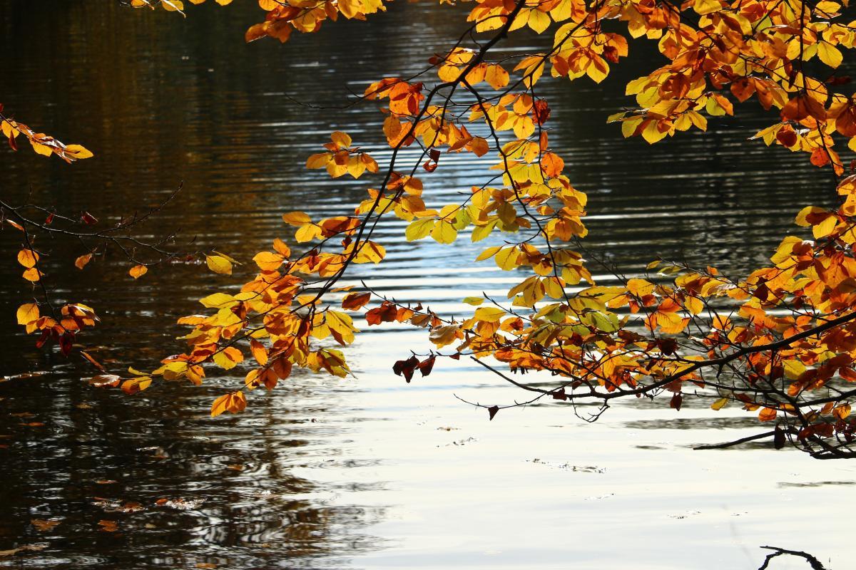 Autumn autumn gold fall foliage golden autumn #76467